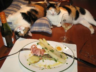 Terwijl Figo en Vanna zich tegoed doen aan dit feestmaal.....